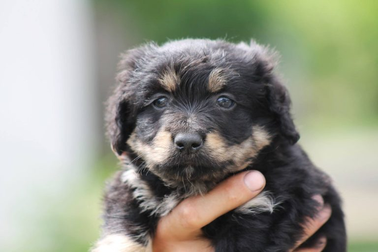 Baby Hunde - Worauf achten beim Kauf auf blogfinanz.de
