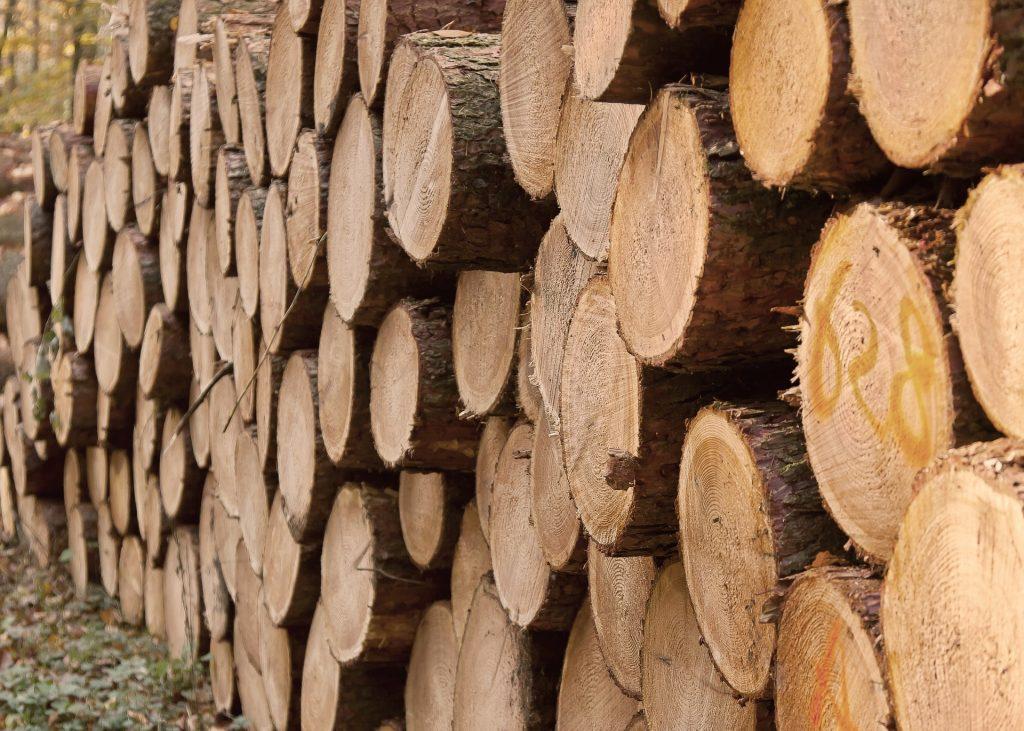 Ein Waldgrundstück kaufen auf blogfinanz.de